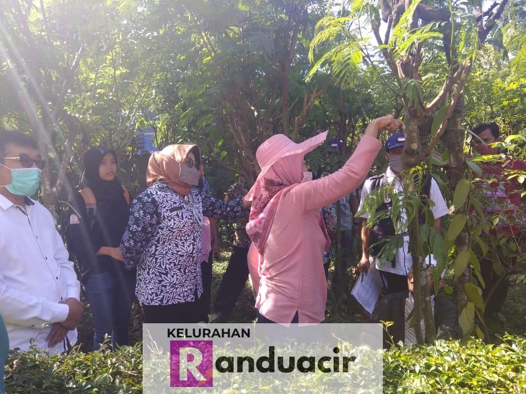 Identifikasi Tanaman Vanili Lokal di RW 2 Dusun Randuacir Salatiga